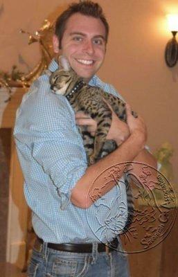 Savannah kitten care will help transition the new kitten in