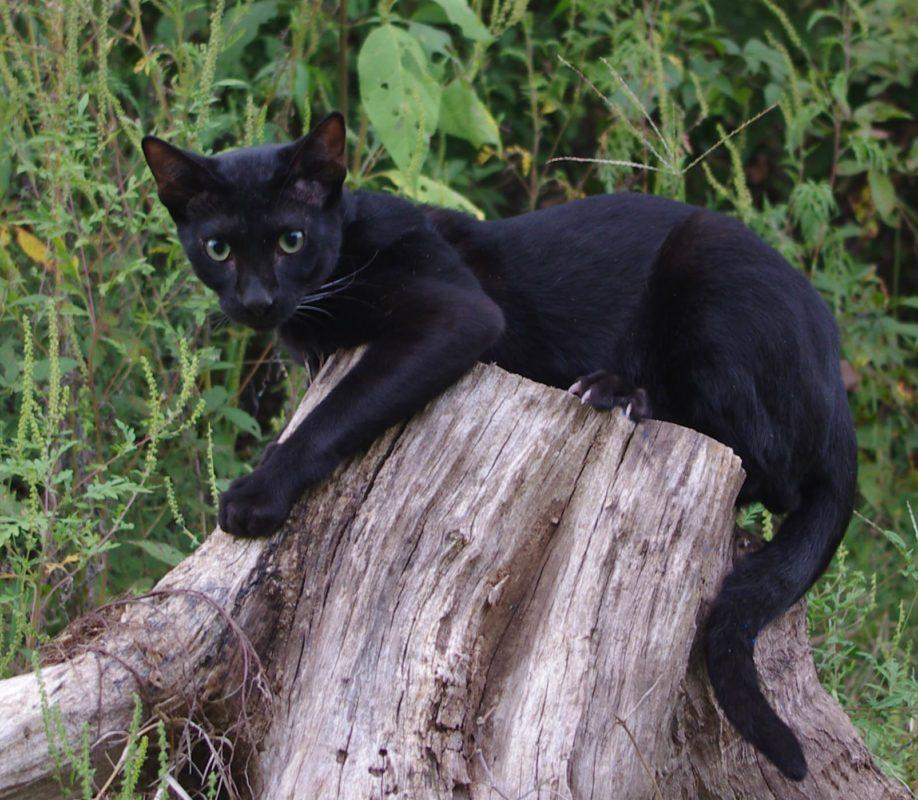 Black savannah