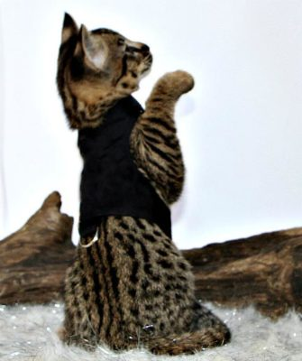 Kitten learning to hunt may be the reason for aggression.