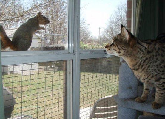 Savannah Cat Association Mission Statement